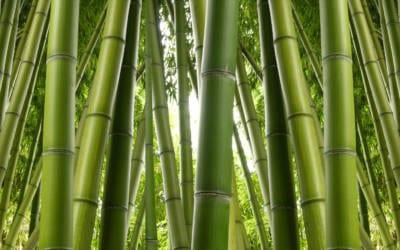 Bambus und andere Viskosefasern